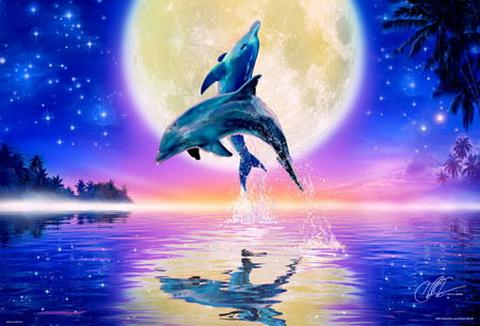 lassen海豚拼图